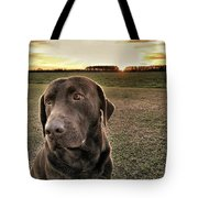 Sunset With My Good Boy Brownie  Tote Bag