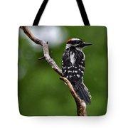 Sunshine Needed - Male Downy Woodpecker Tote Bag