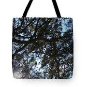 Sunshine Passes Pine  Tote Bag
