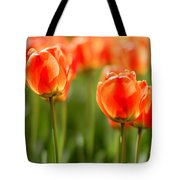 Sunsoaked Tulips #6 Tote Bag