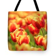 Sunsoaked Tulips #7 Tote Bag