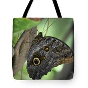Superb Markings On An Owl Butterfly In A Garden Tote Bag