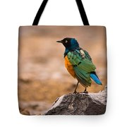 Superb Starling Tote Bag by Adam Romanowicz