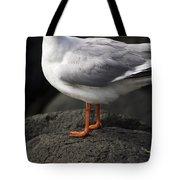 Suprised Australian Seagull Tote Bag