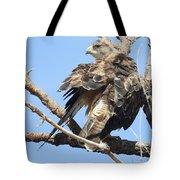 Swainson Hawk Tote Bag