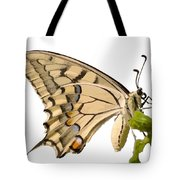 Swallowtail Butterfly Vector Isolated Tote Bag