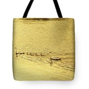 Swan Family Into The Sunset Tote Bag