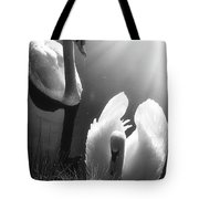 Swan Lake In Winter -  Kingsbury Nature Tote Bag