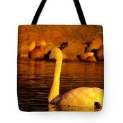 Swan Near Sundown Tote Bag