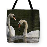 Swans Courtship Tote Bag
