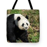 Sweet Chinese Panda Bear Sitting Down In Grass Tote Bag