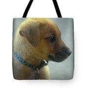 Sweet Faced Cunucu Puppy In Aruba Tote Bag