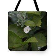Sweet Jasmine  Tote Bag