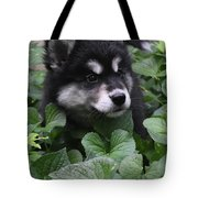 Sweet Markings On The Face Of An Alusky Puppy Dog Tote Bag
