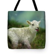 Swet Little Lamb Tote Bag