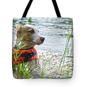 Swimming Family Dog Tote Bag
