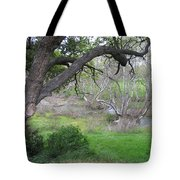 Sycamore Grove Tote Bag