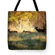 Sycamore Grove Series 10 Tote Bag