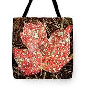 sycamore maple Autumn leaf Tote Bag