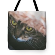 Tabby Cat Looking From Beneath A Blanket  Tote Bag