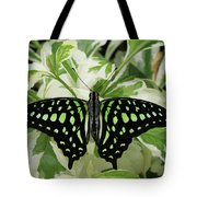 Tailed Jay Butterfly #2 Tote Bag