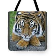 Takin A Break Tiger Tote Bag