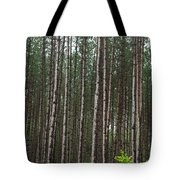 Tall Pines After The Rain Tote Bag
