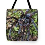 Tarantula Pamphobeteus Sp Male, Mindo Tote Bag