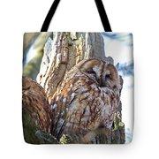 Tawny Owls Tote Bag