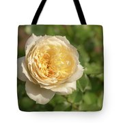 Tchaikovski Hybrid Tea Rose, White Rose Originally Produced By  Tote Bag