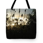 Teasel Sunset Glow Tote Bag