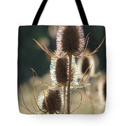 Teasle In Morning Light Tote Bag