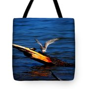 Tern Around Tote Bag