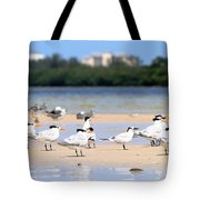Terns At Fort Myers Tote Bag