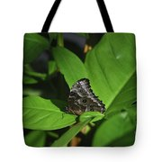 Terrific Eyespots On A Owl Butterfly On Leaves Tote Bag