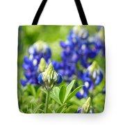 Texas Bluebonnets 003 Tote Bag