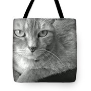 That Spotted Nose Tote Bag