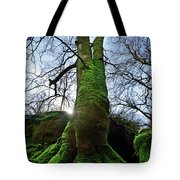 The Acteon Tote Bag