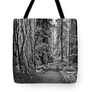 The Beautiful And Massive Giant Redwoods Tote Bag