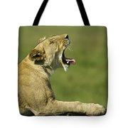 The Big Yawn Tote Bag