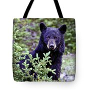 The Black Bear Stare Tote Bag
