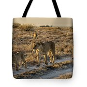 The Black Maned Lions Of The Kalahari Tote Bag