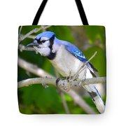 The Blue Jay Tote Bag by Stephanie  Varner