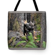 The Burly Bear Cub Close1 - Muir Woods National Monument - Marin County California Tote Bag