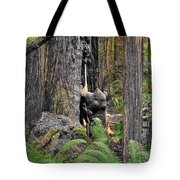 The Burly Bear Cub - Muir Woods National Monument - Marin County California Tote Bag