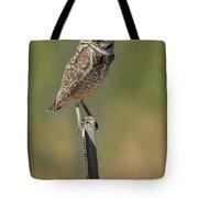 The Burrowing Owl Tote Bag