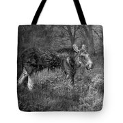 The Calm Of A Moose Bw Tote Bag