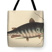 The Cat Fish (silurus Catus) Tote Bag