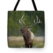 The Challenger Tote Bag by Sandra Bronstein