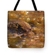The Common Toads 2 Tote Bag
